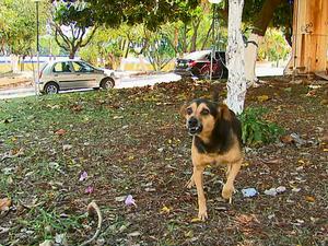 Cachorro defende objetos do dono com os dentes em Aguaí (Foto: Reginaldo dos Santos / EPTV)