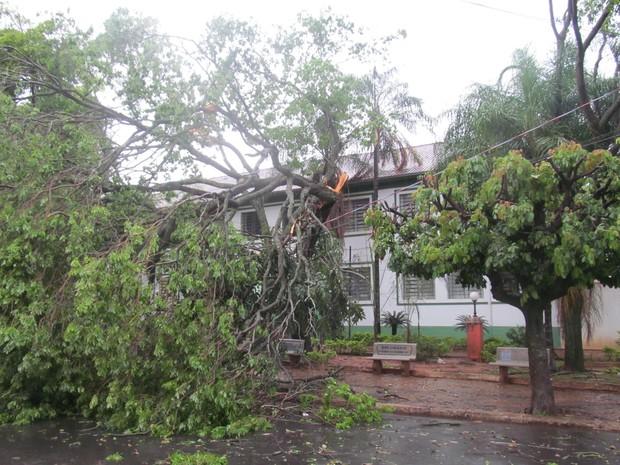 Árvores caíram na praça da Escola Estadual Miguel Couto (Foto: Ronaldo Simões )