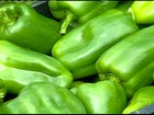 Em MG, produtores de pimentão de Tocantins antecipam a colheita