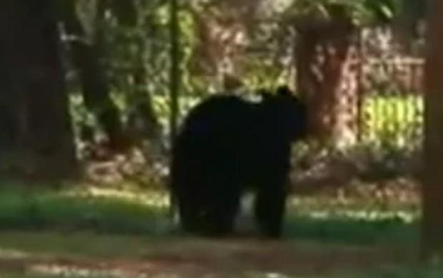 Animal derrubou cerca e 'invadiu' festa de aniversário infantil (Foto: Reprodução/YouTube/wnews)