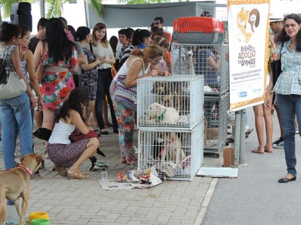 Feira de adoção de animais ocorre em área de shopping na Zona Sul (Foto: Katherine Coutinho/G1)