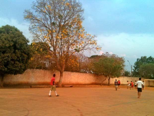 Pé de ipê amarelo junto a quadra na Agrovila Taquara, perto de Planaltina, no Distrito Federal (Foto: Raquel Morais/G1)