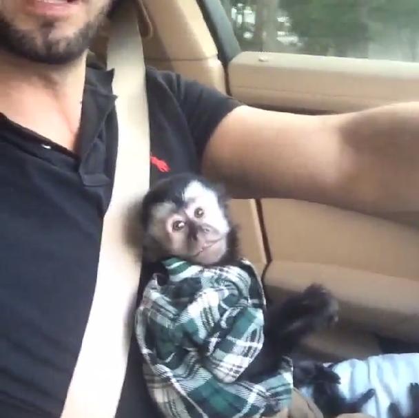 Twelves, o macaco do Latino (Foto: Reprodução/Instagram)