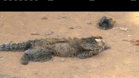 Macaco é encontrado morto na zona rural de Governador Valadares