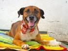 Feira em Porto Alegre coloca mais de 100 animais resgatados para adoção