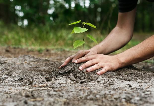 Plantar uma árvore: resolução de Ano Novo para se tornar uma pessoa melhor ; sustentabilidade ; (Foto: Divulgação)