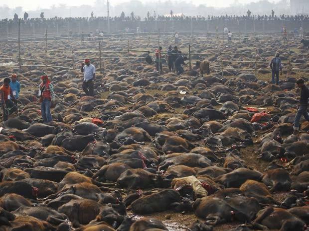 Búfalos foram sacrificados durante cerimônia religiosa nesta sexta-feira (28) no Nepal (Foto: REUTERS/Navesh Chitrakar )