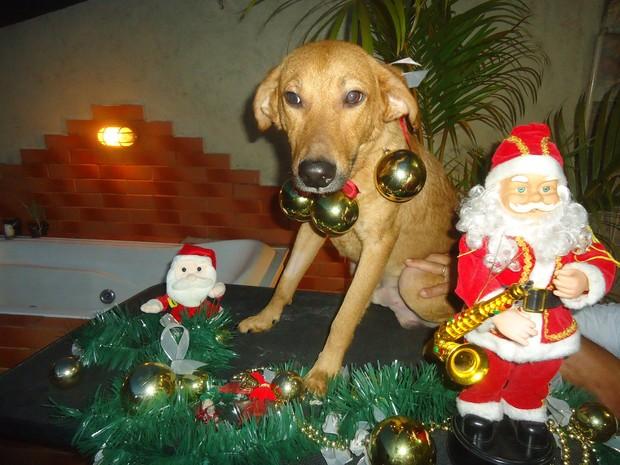 Lucas é um dos cães que procura um lar. (Foto: Zezé Rodrigues)