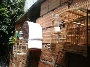 pássaros Uberlândia (Foto: PMMA/Divulgação)