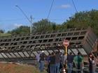 Ativistas protestam contra abate de gados que sobreviveram a acidente