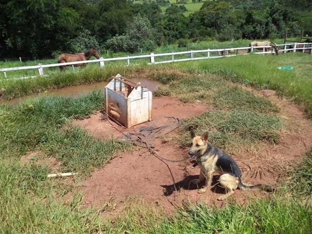 Animal ficava preso em estrutura de madeira em chácara (Foto: Polícia Ambiental/Divulgação)
