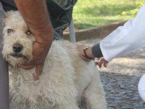 Campanha vacina animais da zona urbana de São João da Boa Vista (Foto: Divulgação/ Prefeitura)