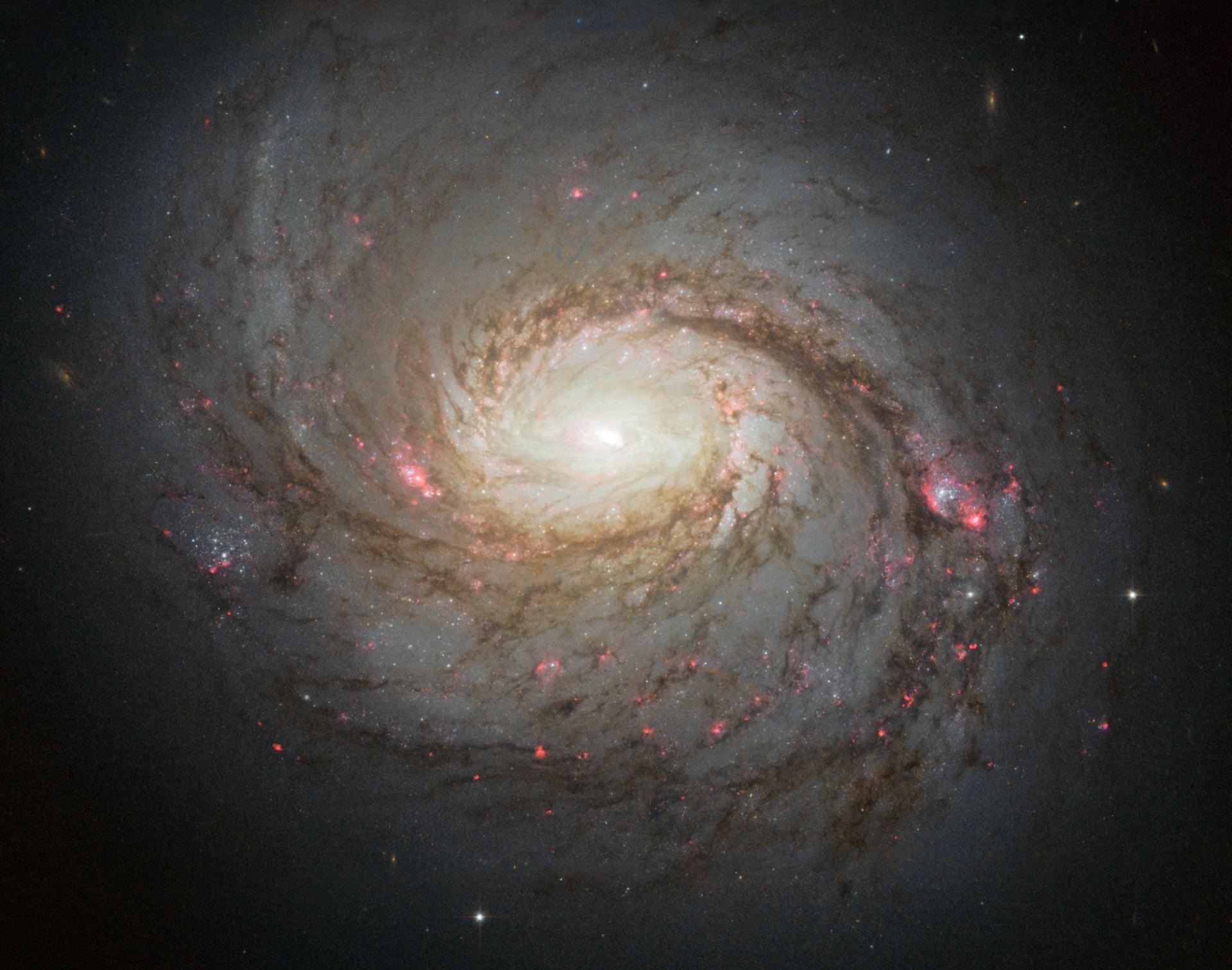 Telescópio Hubble enxerga a galáxia espiral com núcleo ativo NGC 1068 (Foto: NASA/ESA/A. van der Hoeven)