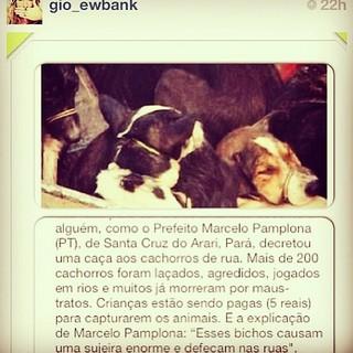 Giovanna Ewbank posta sobre animais em seu Instagram (Foto: Instagram / Reprodução)