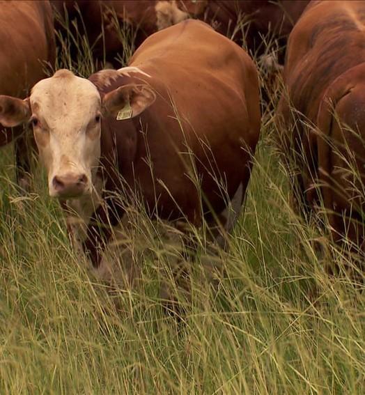 Conheça o menor bioma brasileiro (Globo Rural)