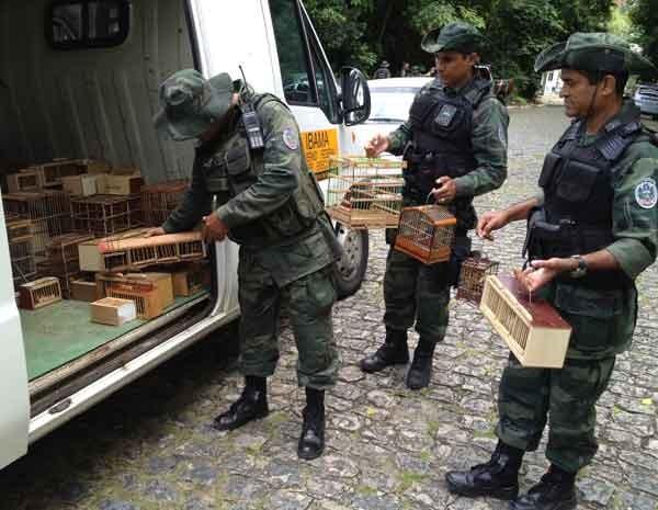 Ação da Polícia Ambiental aconteceu em conjunto com o Ibama neste domingo (2) (Foto: Walter Paparazzo/G1PB)
