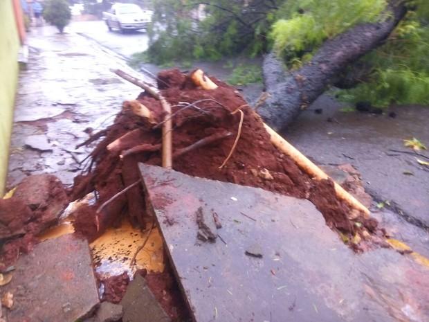 Árvores caíram ou foram arrancadas durante temporal que atingiu Cornélio Procópio (Foto: Arquivo pessoal/Luiz Carlos Lucas)