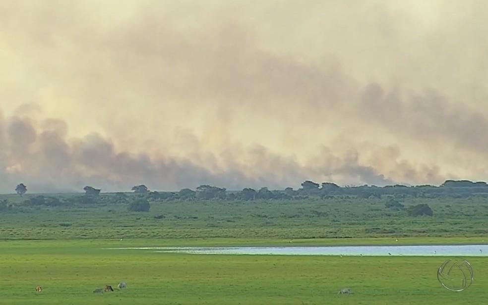 Incêndio que ocorreu no Pantanal em Mato Grosso do Sul no mês de janeiro deste ano (Foto: Arquivo/Reprodução/TV Morena)