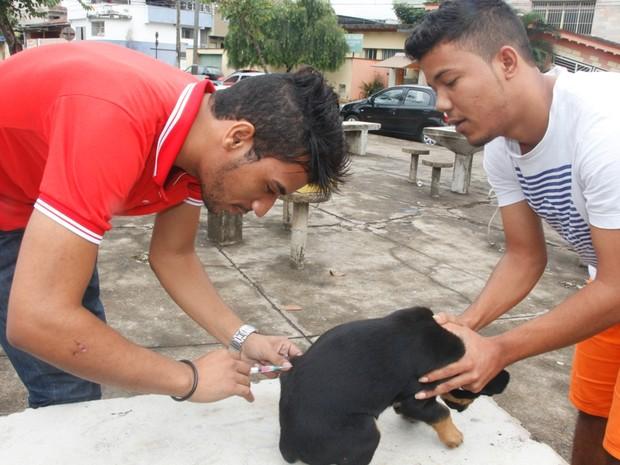 Objetivo é imunizar 80% dos animais do município (Foto: Divulgação/ Secom/PMI)