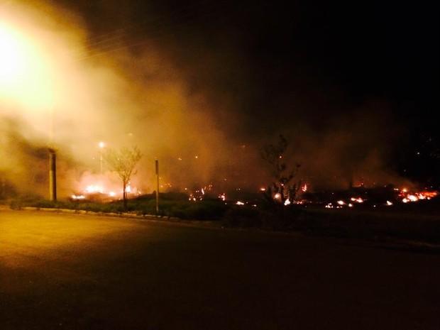 Incêndio atingiu cerca de 400 metros quadrados do Horto Florestal de Casa Branca (Foto: Ary Molinari/Arquivo Pessoal)