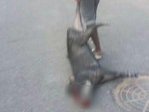 Porcos-do-mato (Foto: Reprodução/Facebook)