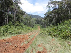 Pista aberta na Terra Indígena Yanomami que era usada no suporte do garimpo ilegal   (Foto: Laudinei Sampaio)