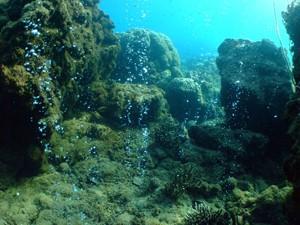Corais na Papua Nova Guiné (Foto: Katharina Fabricius/Australian Institute of Marine Science)