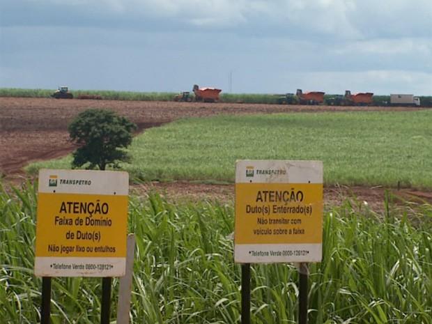 Obras do primeiro trecho do etanolduto, entre Ribeirão e Paulínia, foram concluídas em janeiro (Foto: Carlos Trinca/EPTV)