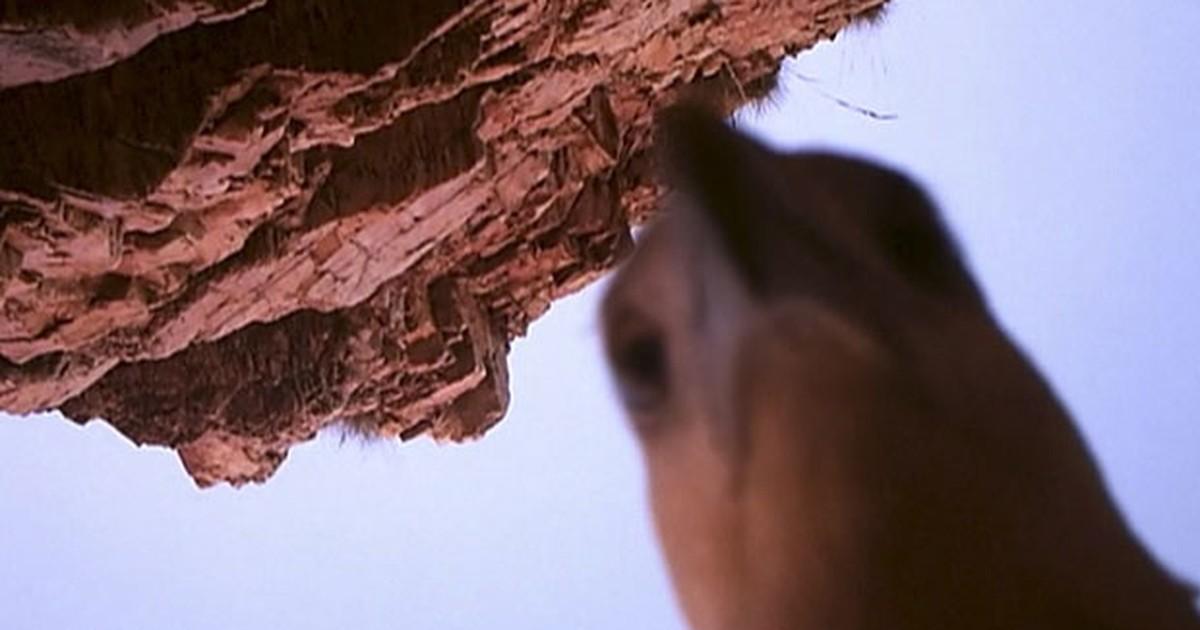 Águia rouba câmera de vídeo na Austrália e registra até autorretrato