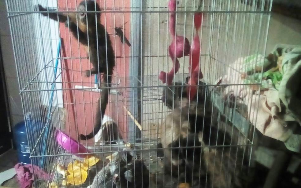 Polícia Ambiental apreende animais silvestres mantidos em cativeiro em Mirassol (Foto: Divulgação/Polícia Ambiental )