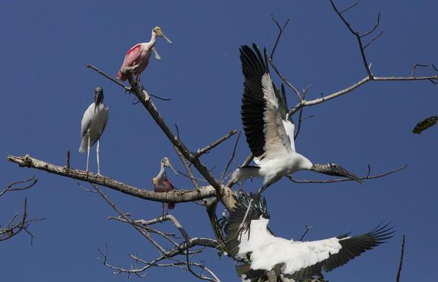 Ninhal do Pantanal (Foto: Divulgação/Sustentar)