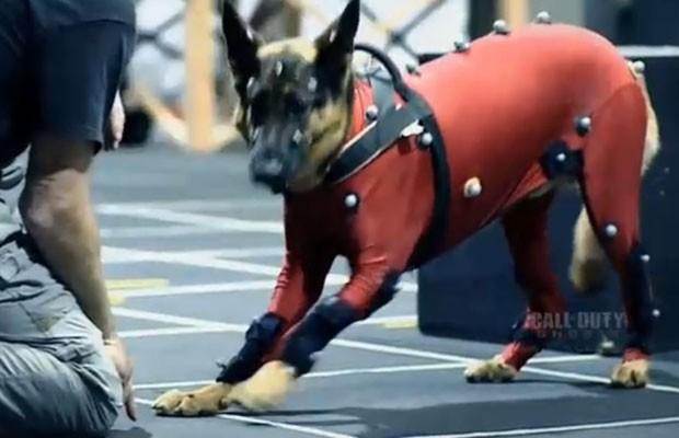"""Imagem do cachorro utilizado para captação de movimentos do cão Riley, personagem crucial do novo game """"Call of Duty: Ghosts"""". (Foto: Reprodução)"""