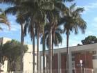 Corte de palmeiras após advogado ser atingido por folha gera polêmica