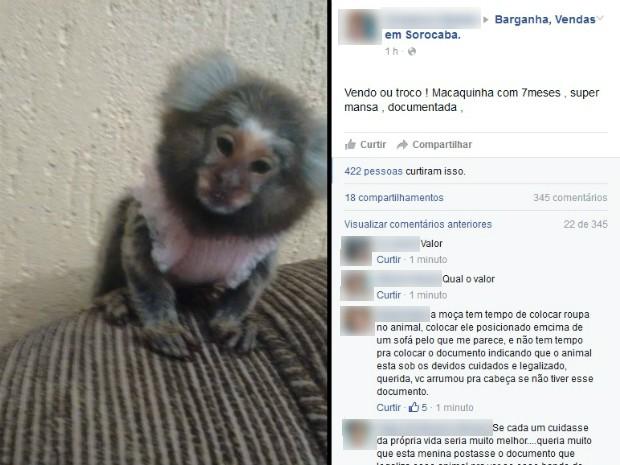 Anúncio de troca de macaco por moto causa polêmica no Facebook (Foto: Reprodução / Facebook)