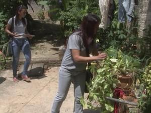 Funcionárias olharam quintais de residências em Tietê (Foto: Reprodução/ TV TEM)