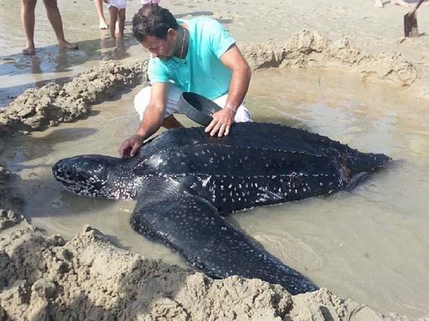 Tartaruga-gigante encalhou na praia de Jacumã, litoral norte do RN (Foto: Anderson Barbosa/G1)