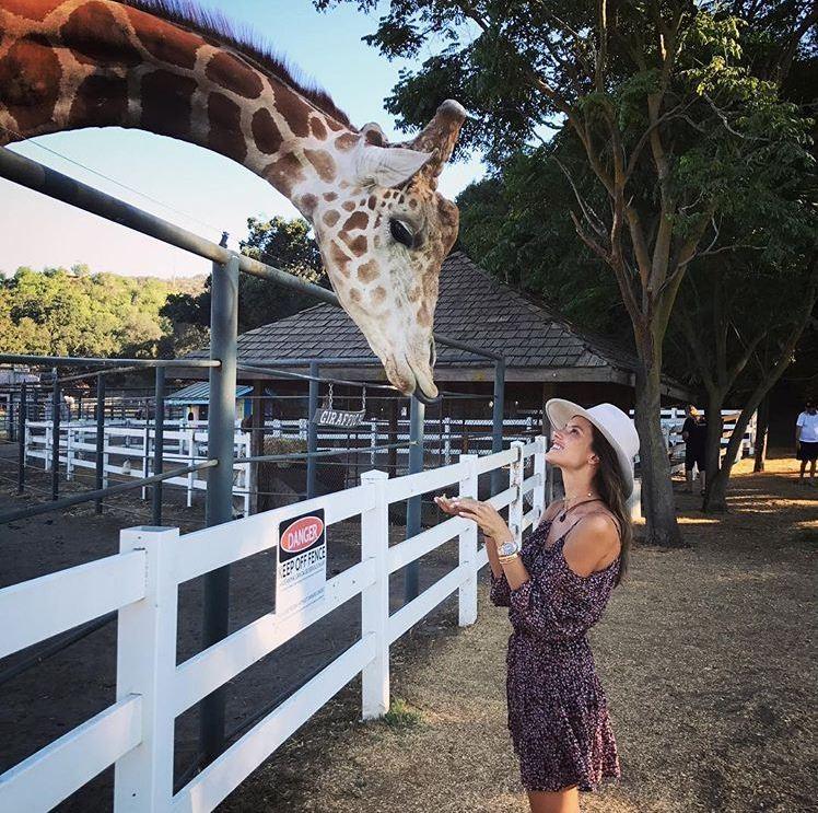 Safári em Malibu: Alê Ambrosio leva a família para conhecer a girafa Stanley (Foto: Reprodução/Instagram)