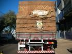 PF apreende caminhão lotado com 800 caixas de cigarros do Paraguai