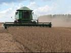 Colheita da soja já começou em nove municípios de MS, diz entidade
