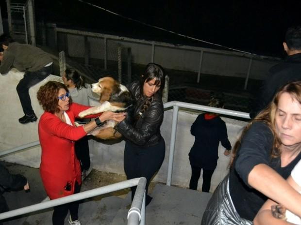 Grupo de ativistas retirou do local os cachorros da raça beagle que são usados em pesquisas (Foto: Divulgação/São Roque Notícias)