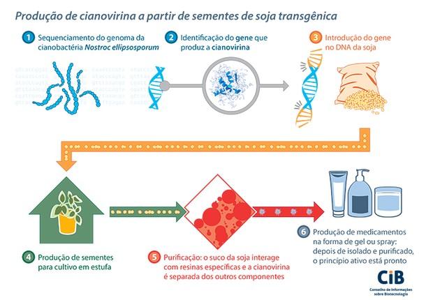 Produção de cianovirina (Foto: Divulgação CIB)
