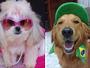 Galerias exibem fotos enviadas por telespectadores para o Mania de Cão