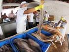Feira do Pescado chega até consumidores de Tucuruí
