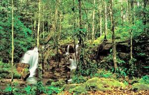 Domínio Amazônico (Foto: Reprodução/Brasil Turismo)