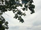 Quarta-feira será de sol fraco e chuvas isoladas em MS, diz Inmet