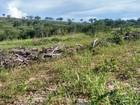Fazendeiro é multado em R$ 67 mil por desmatar 59 hectares em MS