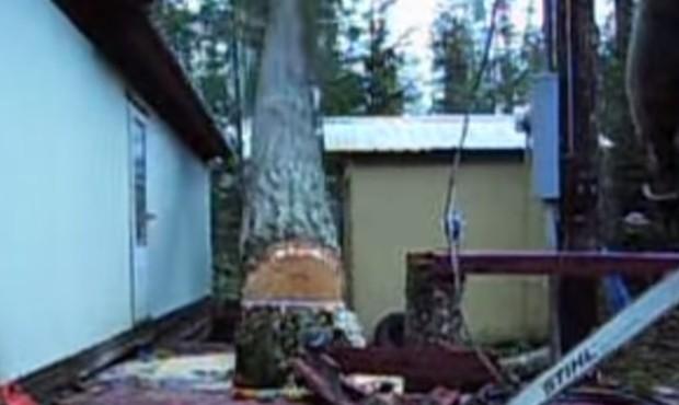 Scott Augur conseguiu derrubar com perfeição árvore entre duas casas (Foto: Reprodução/Imgur/LeJokerJackson)