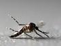 DF registra 19,6 mil casos e 21 mortes por dengue desde janeiro de 2016