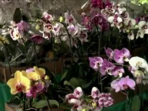 Exposição de flores em Maceió  (Foto: Reprodução/TV Gazeta)