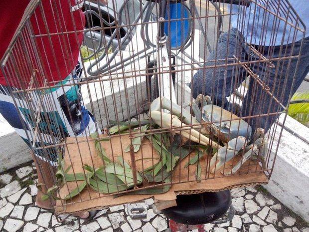 Guaiamu é transportado em gaiola e vira atração em praça (Foto: Anderson Barbosa/Arquivo Pessoal)
